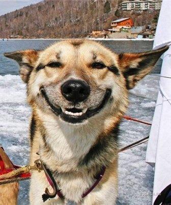 Животные улыбаются