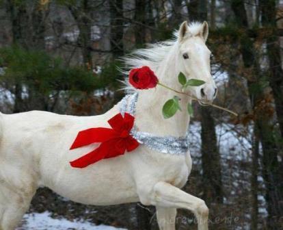 Красивая белая лошадь